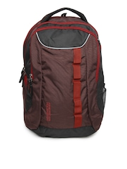 American Tourister Unisex Brown & Red Buzz Backpack