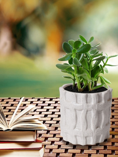 Unravel India White Solid Handcrafted Ceramic Planter