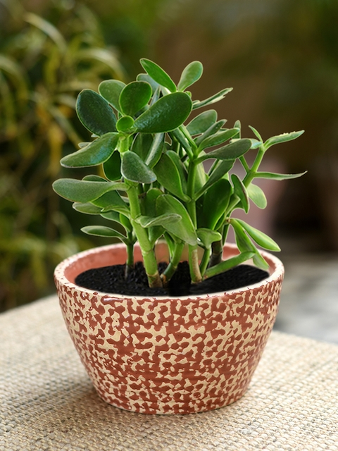 Unravel India Red Ceramic Table Top Planter